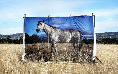 Finalist Adelaide Park Lands Art Prize