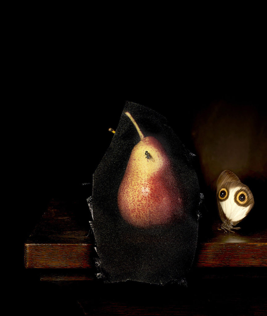 Still life with pear and housefly